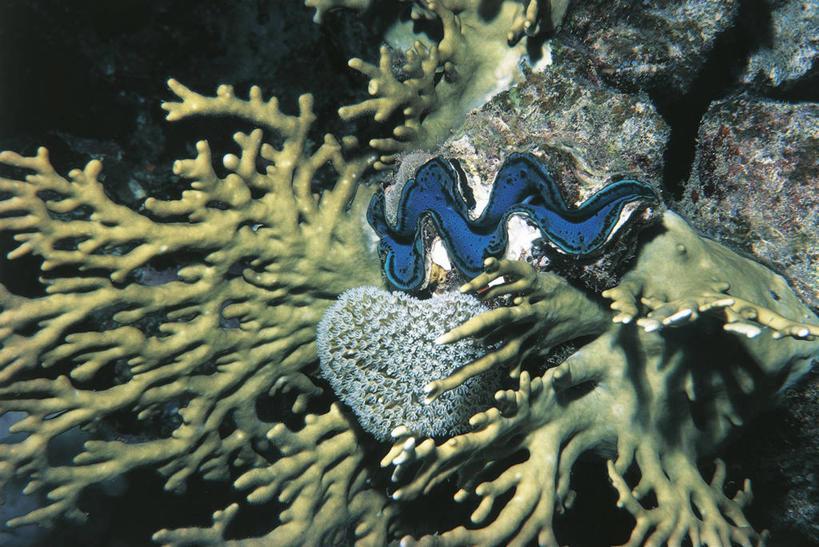 室外,特写,白天,水下,海洋,野生动物,贝壳,科学,自然,蛤,摄影,软体