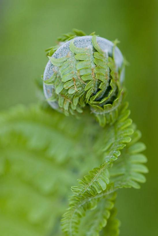 特写,白天,美景,植物,叶子,开,景观,一个,绿色,自然,景色,摄影,单个