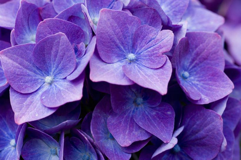 粉紫色的漂亮风景图片