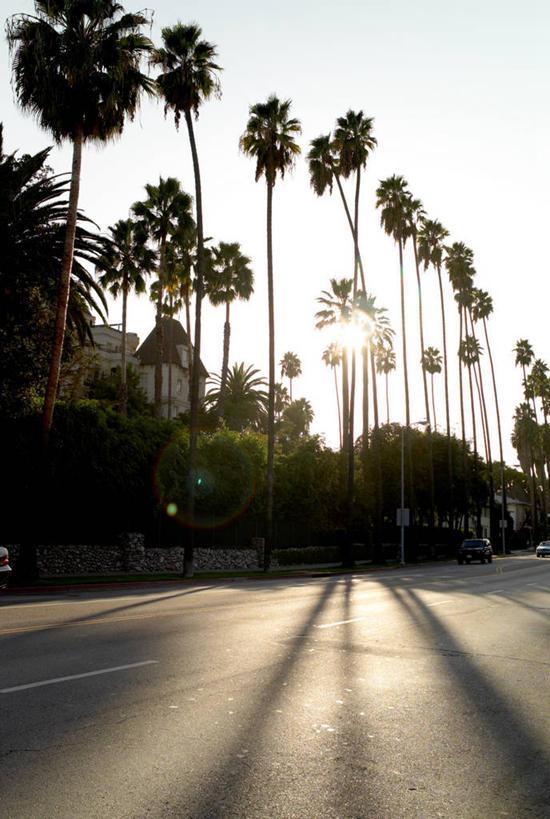 美洲,剪影,加州,洛杉矶,加利福尼亚州,金州,黄金州,北亚美利加洲,亚美