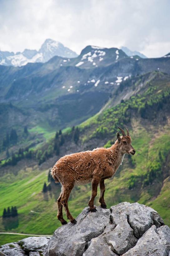 无人,竖图,室外,侧面,美景,山脉,植物,野生动物,羊,法国,景观,云,下雪