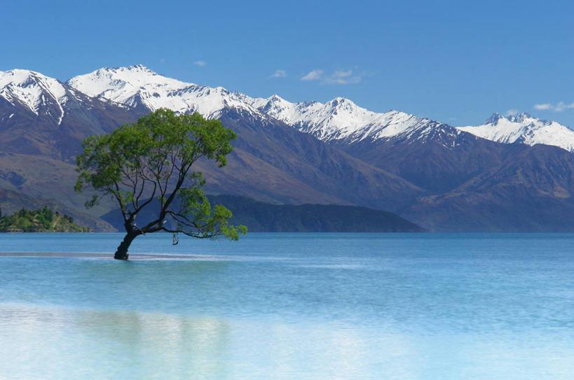 山脉,雪山,日光,新西兰,反射,景观,宏伟,树,风景,天空,自然,夏天,景色