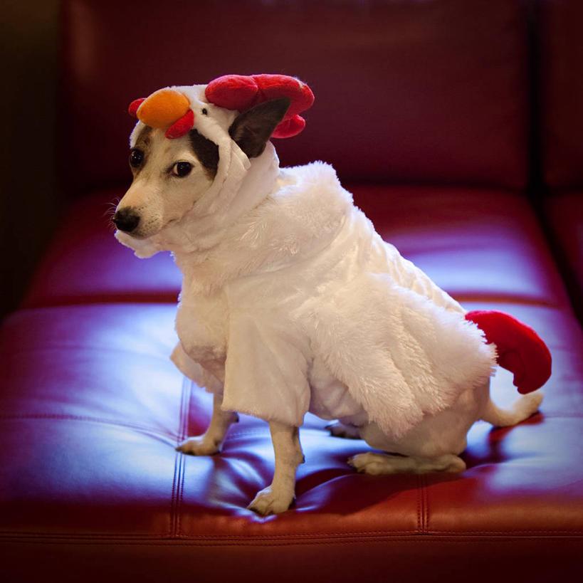 童趣森动物图片