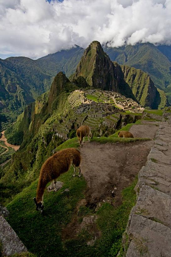 无人,竖图,室外,白天,山脉,野生动物,秘鲁,三只,山顶,云,石墙,骆驼