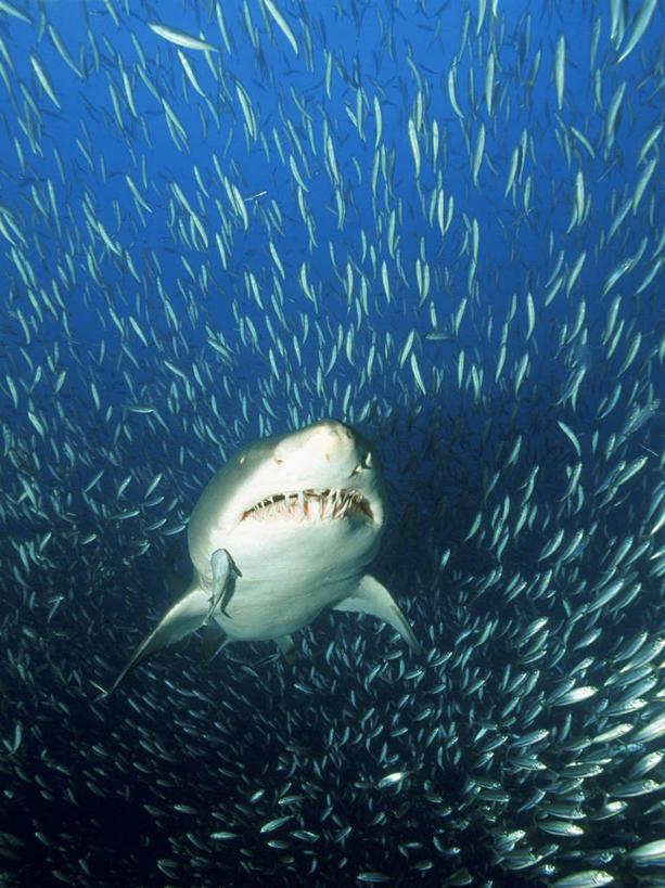 壁纸 动物 海底 海底世界 海洋馆 水族馆 鱼 鱼类 613_819 竖版 竖屏