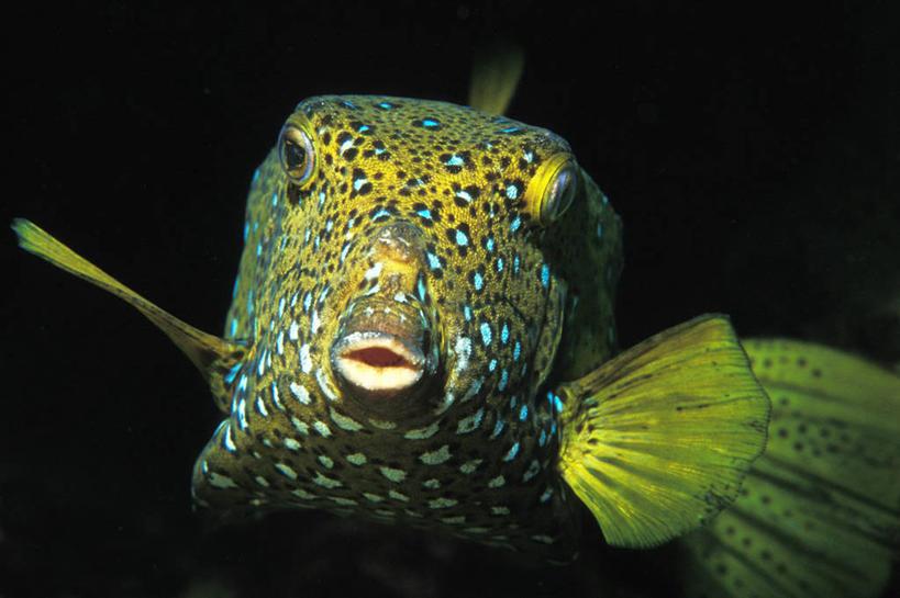 水下,海洋,贝壳,非洲,埃及,鱼,珊瑚,水产,鱼类,海洋生物,自然,动物