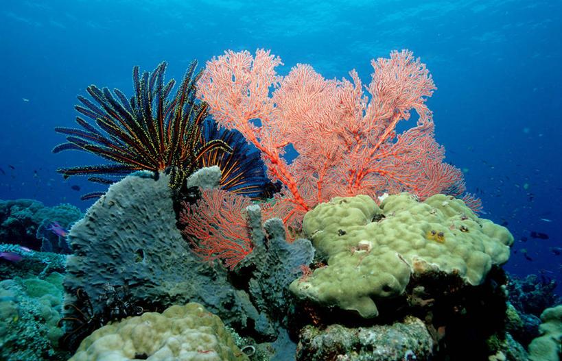 太平洋,软珊瑚,硬珊瑚,水生动物,水生物,棘皮动物,海底动物,海百合,暗