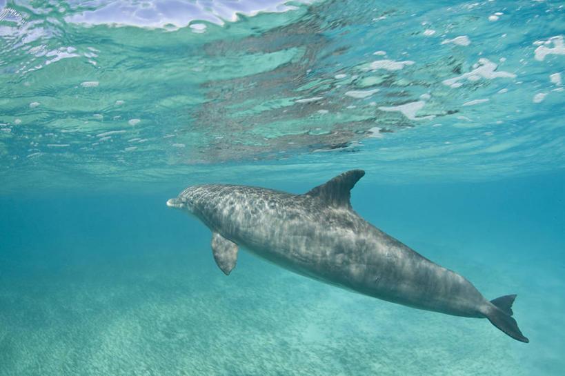 动物,大西洋,摄影,鲸,脚蹼,西印度群岛,水生动物,水生物,海底动物