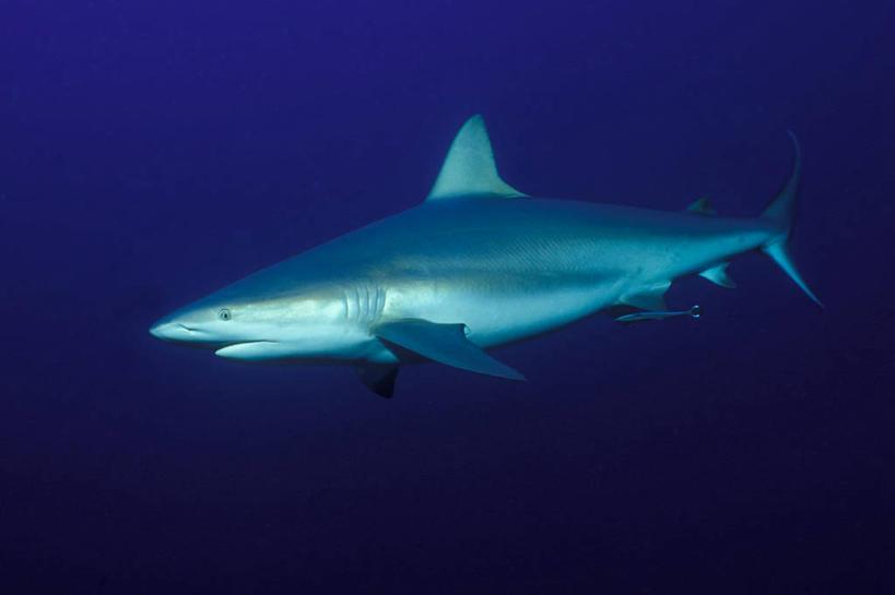 海洋十大凶猛动物图片