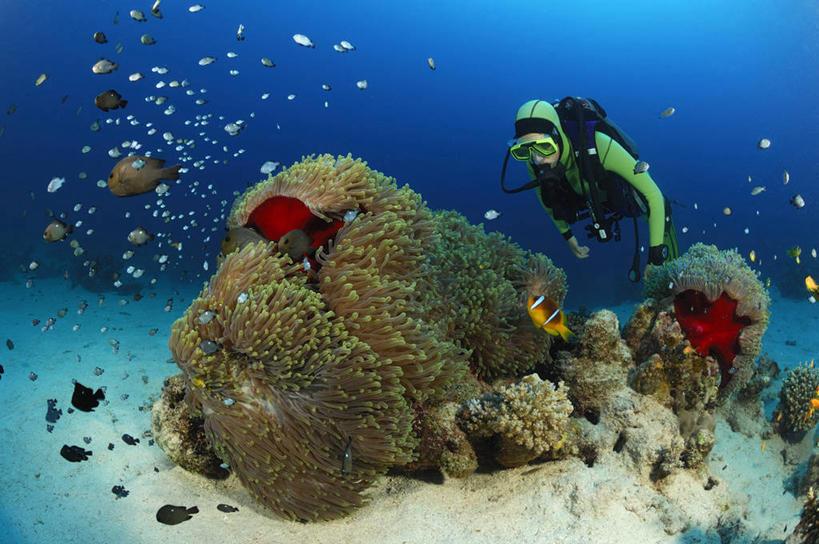 珊瑚,鱼类,路人,旅客,海洋生物,无脊椎动物,自然,摄影,鲈鱼,腔肠动物