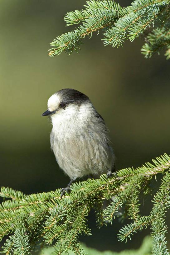 野生动物,美国,鸟类,枝,摄影,北美,僵鸟,彩图,动物学,阿拉斯加山脉