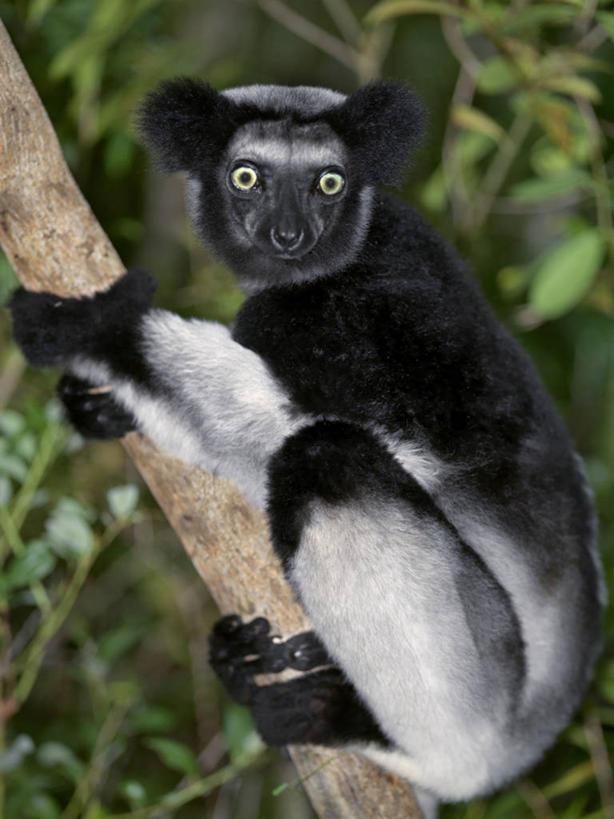 qq头像黑白可爱猴子