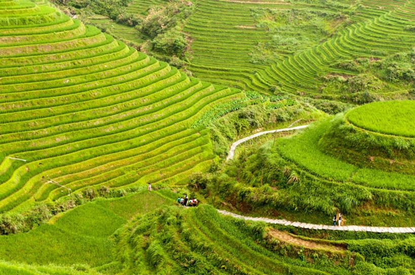 横图,俯视,航拍,室外,白天,农业,稻田,田地,风景,自然,摄影,宁静,鸟瞰