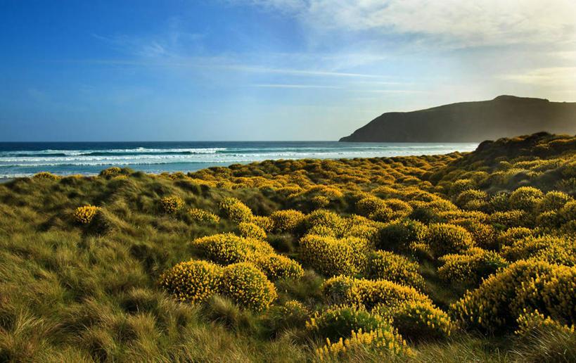 海洋,新西兰,地形,海岸线,水平线,草,风景,摄影,宁静,达尼丁,海滩