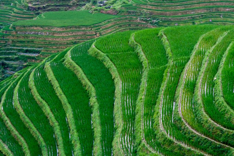 无人,横图,室外,白天,农业,房屋,稻田,层次,绿色,风景,自然,摄影,生长