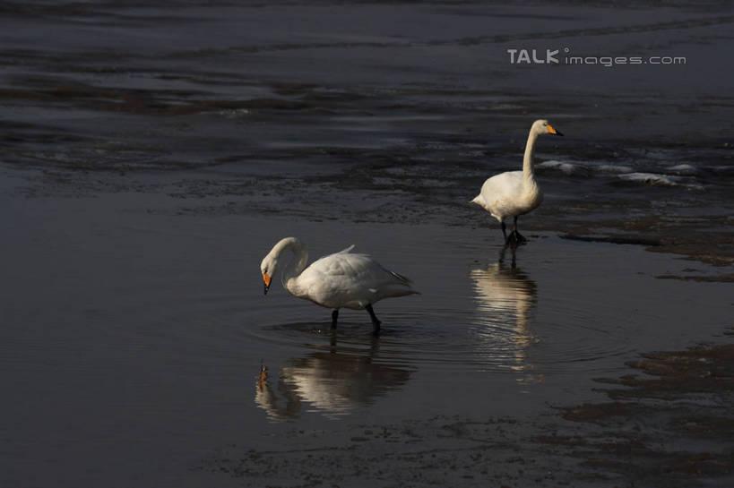 无人,站,横图,俯视,室外,白天,湖,湖泊,美景,水,雪,大雪,鸟,野生动物