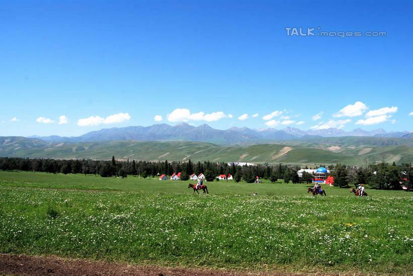 群山,天,享受,休闲,景色,放松,运输,牲畜,生长,晴朗,成长,自然风光