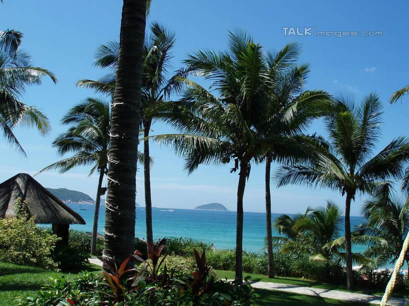 海水,天,享受,休闲,嫩叶,景色,放松,海南省,生长,晴朗,成长,自然风光