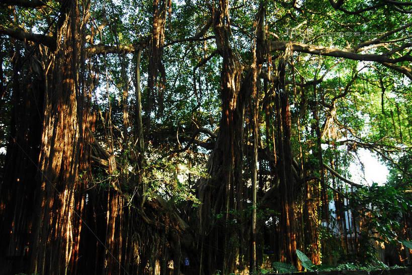 树木组合风景简笔画