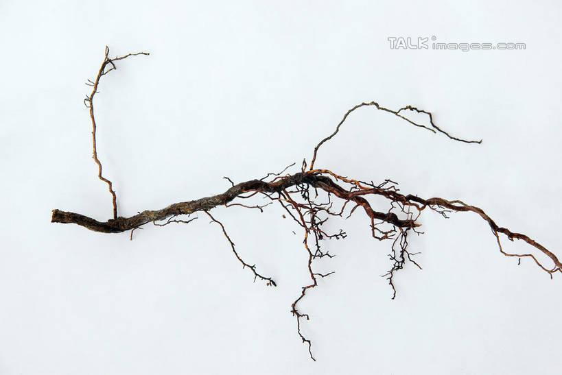 无人,横图,俯视,室内,特写,白天,白色背景,植物,阴影,反射,纹路,纹理