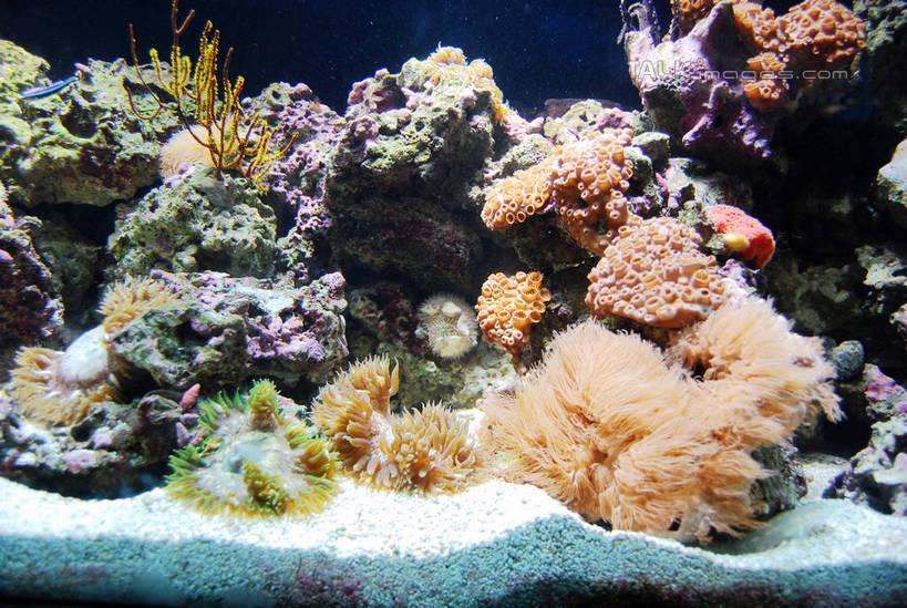 一群,许多,表演,鱼,珊瑚,水底,很多,珊瑚礁,鱼类,海洋生物,无脊椎动物