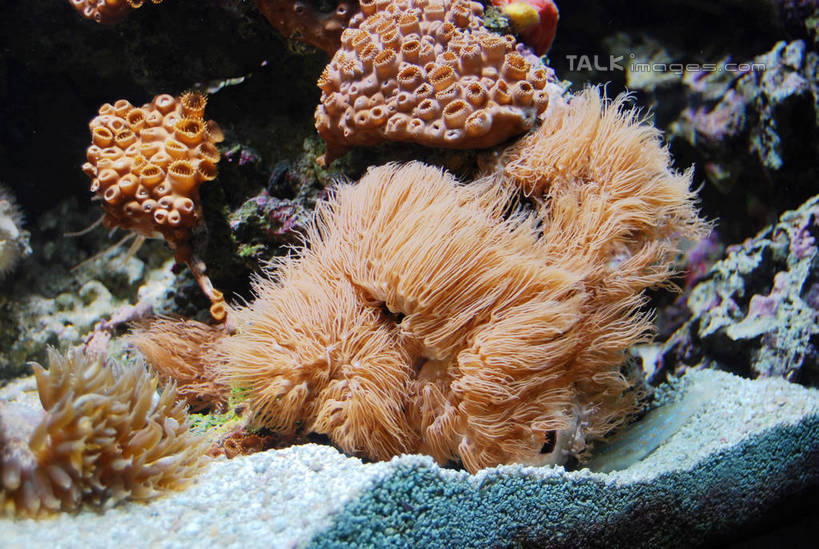 珊瑚礁,鱼类,海洋生物,无脊椎动物,水族馆,展示,海底世界,展览,腔肠