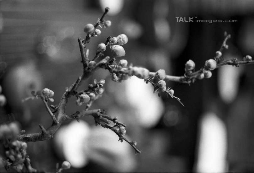 卡通梅花花瓣黑白