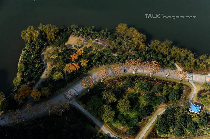 俯视树林手绘