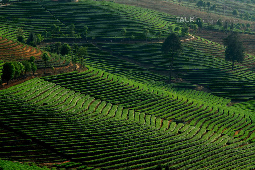 绿色,阳光,自然,群山,享受,休闲,景色,放松,蜿蜒,生长,成长,自然风光