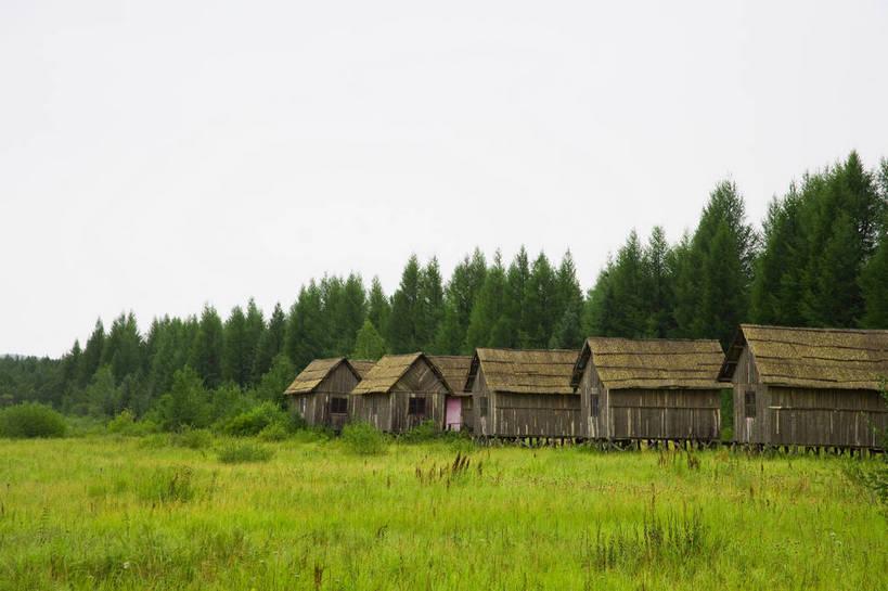树林,坝上,中国,亚洲,景观,住宅,树木,绿色,自然,景色,摄影,自然风光