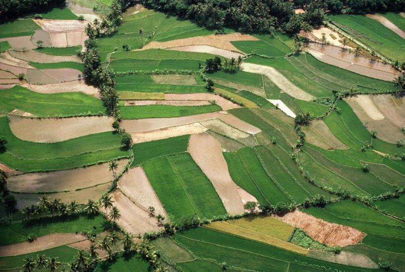 印尼,亚洲,完整,地,稻田,大米,绿色,风景,框架,天,摄影,鸟瞰,东亚文化